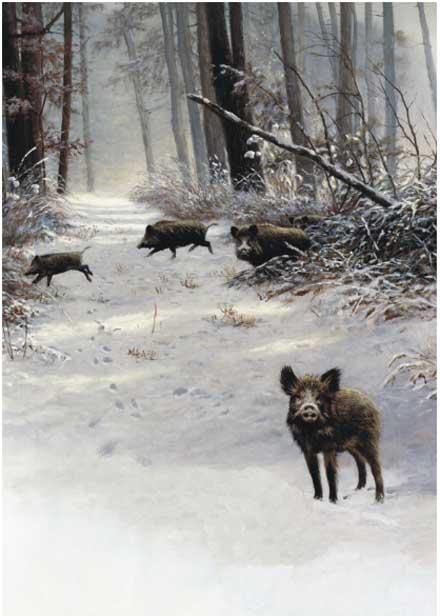 jagd- einladungen, Einladung